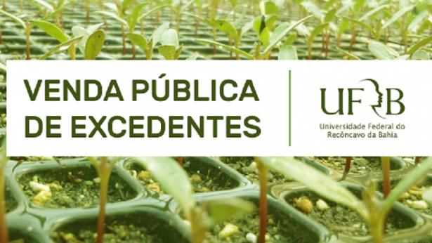 Cruz das Almas: UFRB comercializa excedentes de atividades de poda e produção de mudas - cruz-das-almas