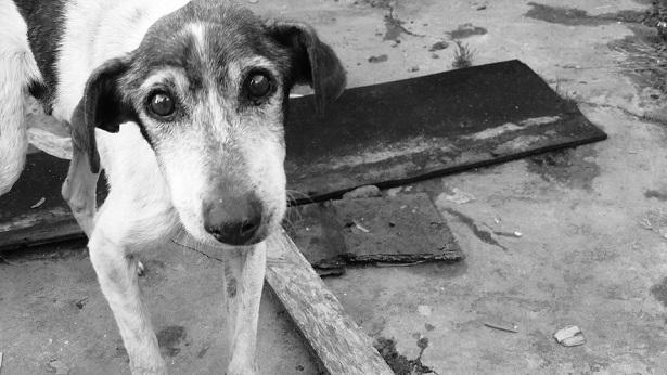 Animais abandonados são resgatados em Cruz das Almas - destaque, cruz-das-almas