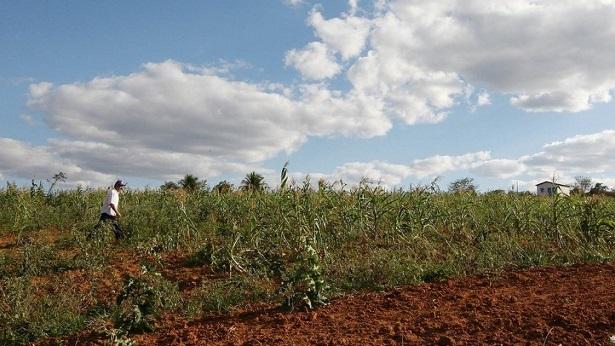 Cidade baiana lidera produção agrícola no Brasil - economia, bahia