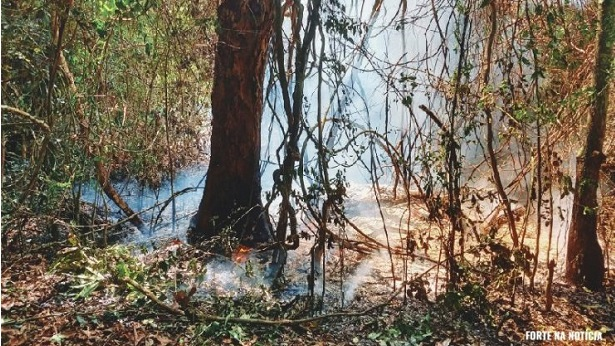 Cruz das Almas: Incêndio de grandes proporções atinge Mata de Cazuzinha - destaque, cruz-das-almas