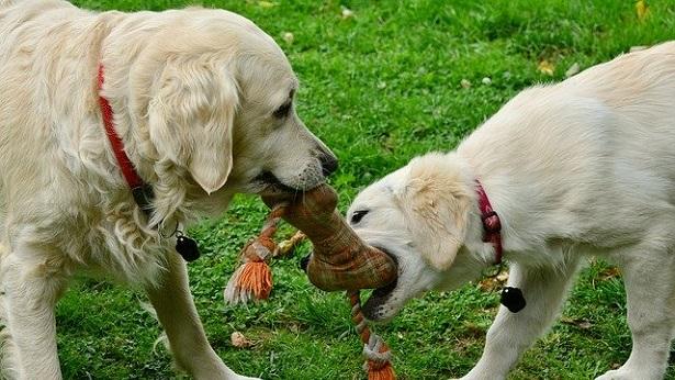 Quarentena influencia comportamento e alimentação dos pets - brasil