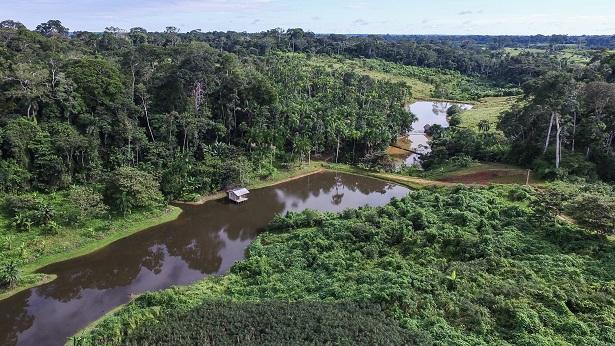 Funções sociais e econômicas das florestas garantem saúde e desenvolvimento - artigos