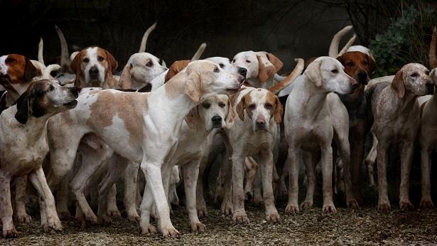 Senado pode votar na quarta, 09, pena de prisão para quem maltratar animais - justica