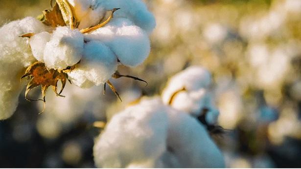 IBGE projeta produção baiana de grãos 1,1% menor em 2020 - economia