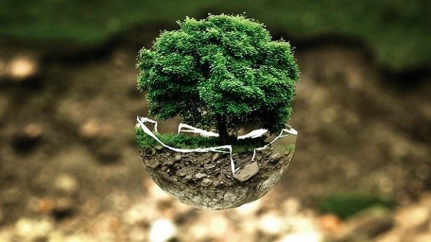 ARTIGO: Por que precisamos de educação ambiental nas escolas? - direito, artigos