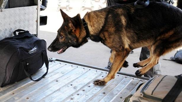Vitória da Conquista: Droga que seria levada para Feira, é descoberta por cão farejador - vitoria-da-conquista, policia, feira-de-santana, bahia