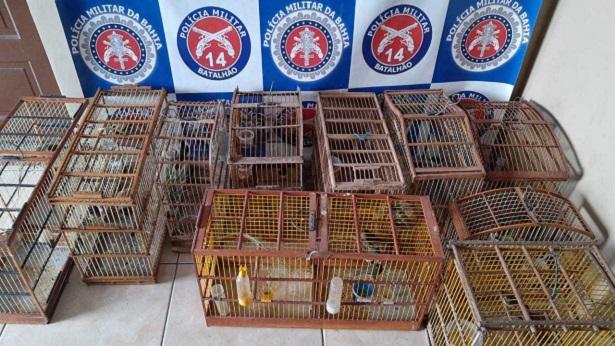 Pássaros foram resgatados pela PM em Nazaré e Muniz Ferreira nesta segunda, 15 - noticias, nazare, muniz-ferreira