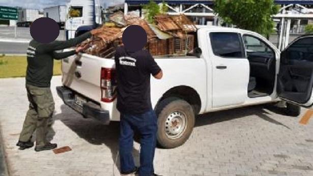 Paulo Afonso: Pássaros silvestres são resgatados do tráfico - policia, paulo-afonso, bahia