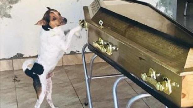 Camaçari: Cachorro chora em velório de dona - camacari, bahia