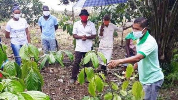 Ituberá: Guaraná produzido pela agricultura familiar conquista mercados nacional e internacional - noticias, itubera, bahia