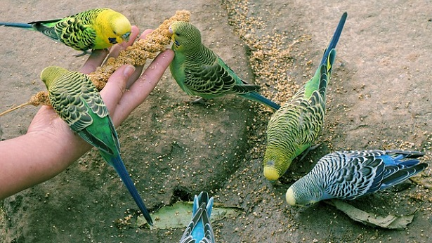 11 dicas para ter aves pet - dicas, brasil