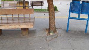 SAJ: Município fará supressão e substituição de árvores na praça Padre Mateus - saj, noticias, destaque