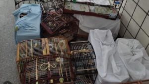 Ilhéus: Onze pessoas são conduzidas após torneio irregular de aves no Teotônio Vilela - ilheus, bahia