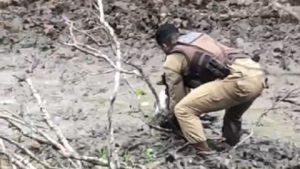 Monte Santo: Bezerro é resgatado por policial após ficar atolado em charco - monte-santo, bahia