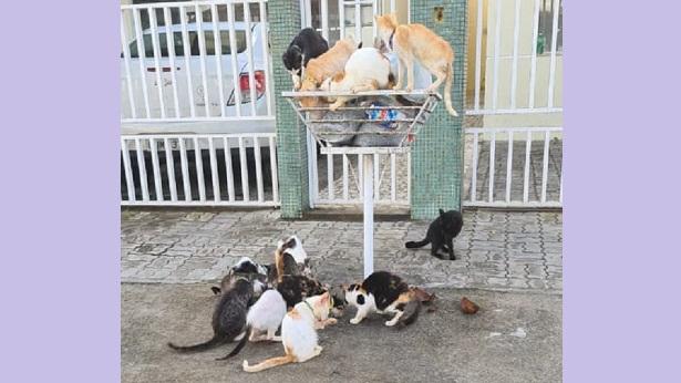 SAJ: Moradores do Bairro Santa Rita pedem providências sobre gatos na rua - saj, noticias, destaque
