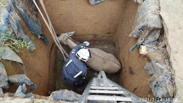 Porto Seguro: Jumenta prenha cai em fossa de 4 metros de profundidade - porto-seguro, bahia
