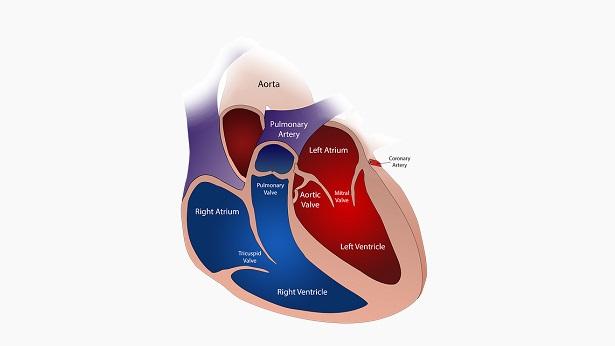 Dissecção da Aorta é uma emergência frequentemente fatal quando não identificada - saude