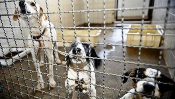 Bolsonaro sanciona lei que proíbe eutanásia de cães e gatos de rua - politica