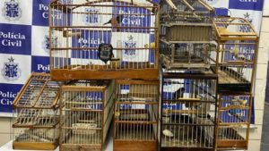 Jequié: Polícia Civil resgata pássaros silvestres - noticias, jequie, bahia