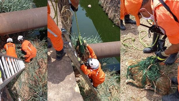 Barreiras: Bombeiros resgatam cachorro em canal de esgoto - noticias, barreiras, bahia